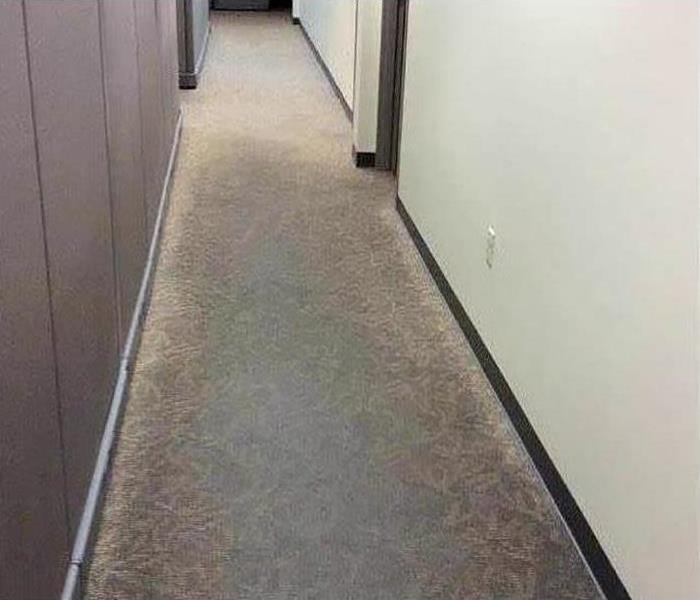 water damaged carpet in office hallway