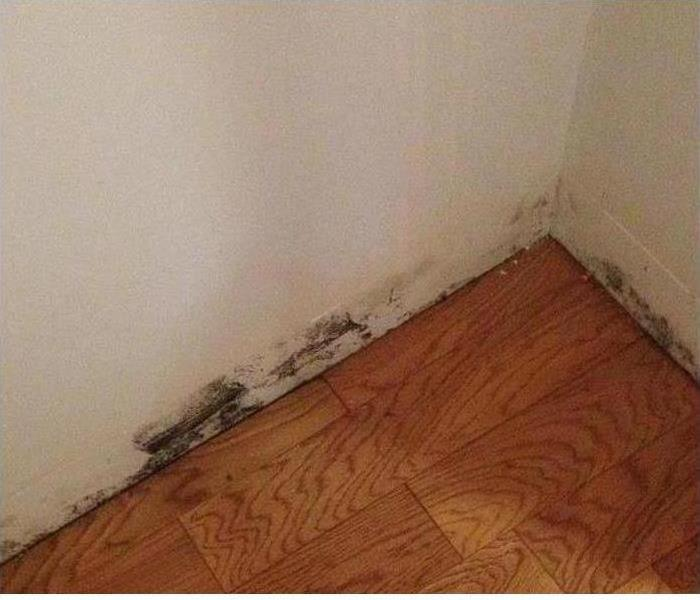 Mold Damage – Concord Home Before
