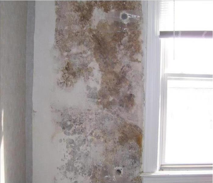 Mold Damage in a Concord Property