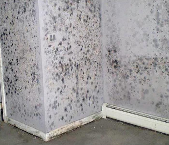 Mold Restoration In Concord