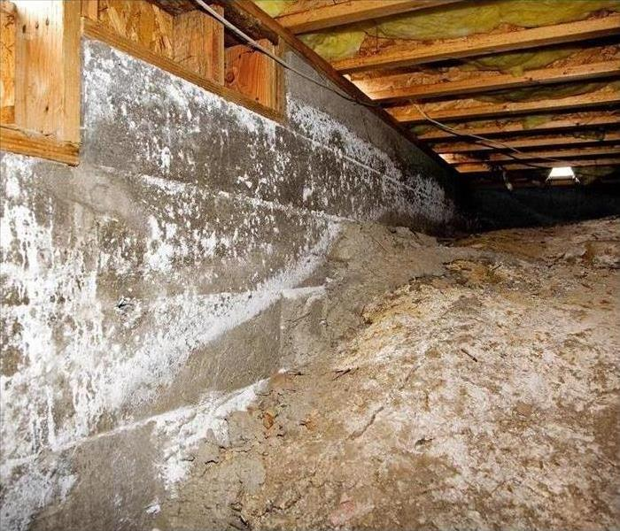 Why SERVPRO Mold Damage Cleaning in Bow