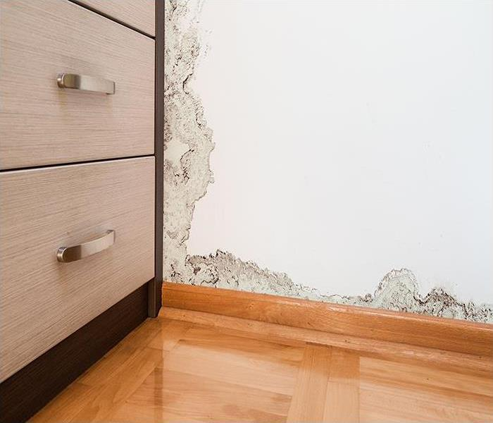 Mold Remediation Cleaning Mold Damage And Restoring Concord Homes
