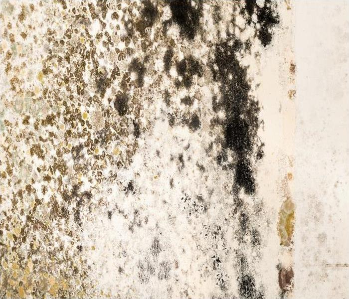 Mold Remediation Our Ultimate Guide To Removing Mold From Your Concord Attic